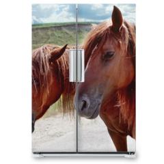 Naklejka na lodówkę - Red horses with long mane against sky