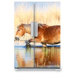 Naklejka na lodówkę - Sorrel mare is walking through the water