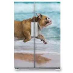 Naklejka na lodówkę - Happy dog Bulldog running at the sea
