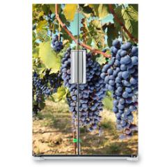 Naklejka na lodówkę - tuscany wine grapes