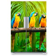 Naklejka na lodówkę - Blue-and-Yellow Macaw