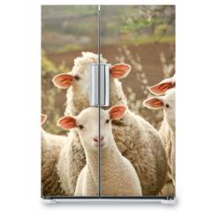 Naklejka na lodówkę - Sheep on pasture
