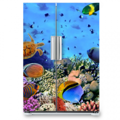 Naklejka na lodówkę - Photo of a coral colony