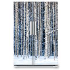 Naklejka na lodówkę - Snowy birches