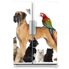 Naklejka na lodówkę - Group of pets - Dog, cat, bird, reptile, rabbit,...