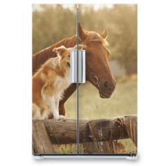 Naklejka na lodówkę - Red border collie dog and horse