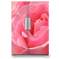 Naklejka na lodówkę - Kwiat róży