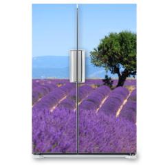 Naklejka na lodówkę - Lavender field. The plateau of Valensole in Provence