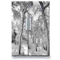 Naklejka na lodówkę - Frozen Forest