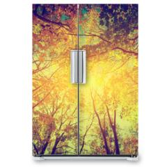 Naklejka na lodówkę - Autumn, fall trees. Sun shining through colorful leaves. Vintage