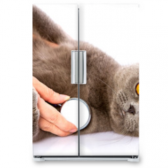 Naklejka na lodówkę - doctor and a British cat on white background