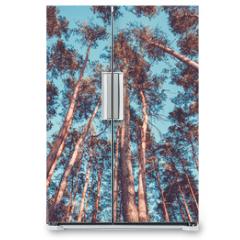 Naklejka na lodówkę - Silhouette of pine forest