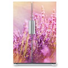 Naklejka na lodówkę - Lavender flowers lit by sun rays (sunbeams)