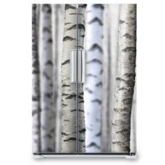 Naklejka na lodówkę - seamless birch trees