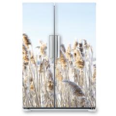 Naklejka na lodówkę - Frozen dry grass.