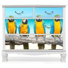 Naklejka na meble - Blue and Gold Macaw on tropical beautiful beach and sea