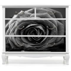 Naklejka na meble - Rose, Nahaufnahme, schwarzweiss Umwandlung