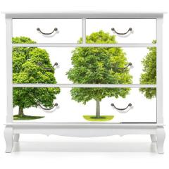 Naklejka na meble - Set trees maple, oak, birch, chestnut. Isolated objects