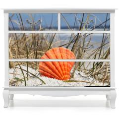 Naklejka na meble - Sea shell