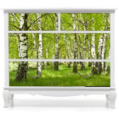 Naklejka na meble - Brzozowy zagajnik wczesną wiosną w pogodny dzień, Młode brzozy z młodymi zielonymi liśćmi w świetle słońca.