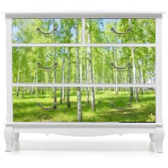Naklejka na meble - summer birch forest