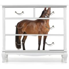 Naklejka na meble - Pferd weißer Hintergrund