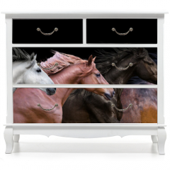 Naklejka na meble - Six horses portraits isolated on a black background