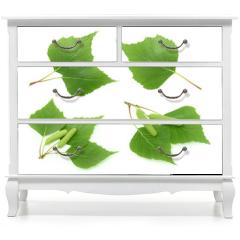 Naklejka na meble - Birch leaves isolated. set
