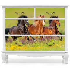 Naklejka na meble - Horses run gallop in flower meadow