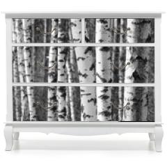 Naklejka na meble - Birch tree trunks - black and white natural background