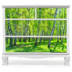 Naklejka na meble - birch grove on a sunny day