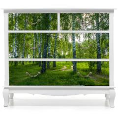 Naklejka na meble - In the birch grove on a summer day.