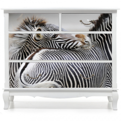 Naklejka na meble - Zebra