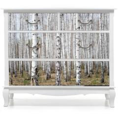Naklejka na meble - birch forest