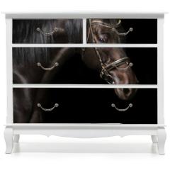 Naklejka na meble - Portrait of a bay stallion