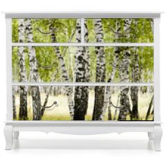 Naklejka na meble - birch forest summer landscape