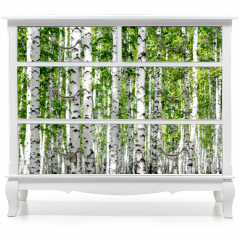 Naklejka na meble - White birch trees in the forest in summer