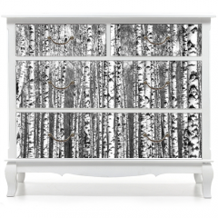 Naklejka na meble - Spring trunks of birch trees black and white