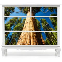 Naklejka na meble - Giant Sequoia