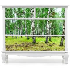 Naklejka na meble - Birch grove on a sunny summer day, landscape banner, huge panorama