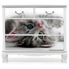 Naklejka na meble - Kitten rest - isolated