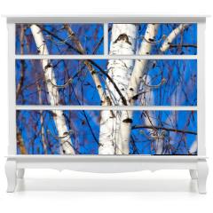 Naklejka na meble - Trunk of a birch against a blue sky