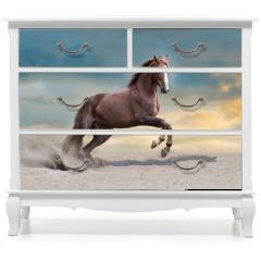 Naklejka na meble - Red horse run in desert dust against blue sky