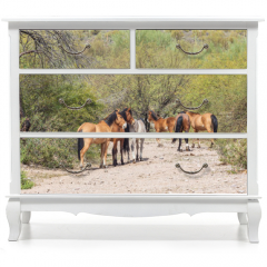 Naklejka na meble - Wild Horses Near the Salt River in the Arizona Desert