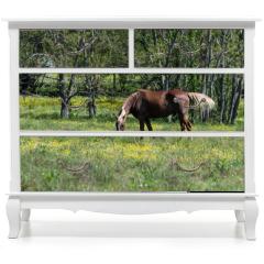 Naklejka na meble - Brown horse grazing