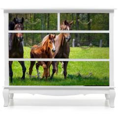 Naklejka na meble - Pferdehaltung - zwei Pferde und ein Fohlen toben ausgelassen auf einer grünen Pferdekoppel