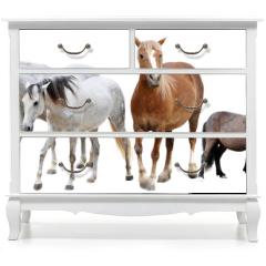 Naklejka na meble - horses and ponies