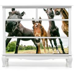 Naklejka na meble - two horses in stable
