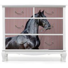 Naklejka na meble - Portrait of black Spanish horse.