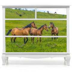 Naklejka na meble - Horses in the steppe. Pets graze in the spring steppe.